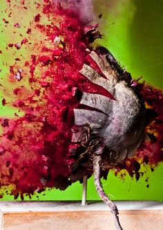 Bullet through food - explosive art!