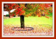 Fall Photography Photographer Fall Pics Fall Colors
