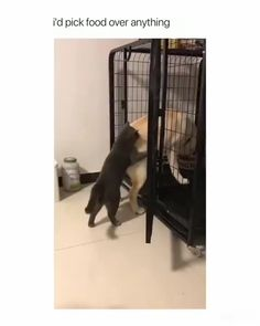 Funny Cats And Dogs, Cute Dogs And Puppies, Funny Video Memes, Funny Videos, Animal Video, Nature Gif, Great Videos, Dog Cat, Photo And Video