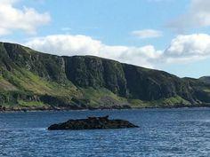 Et pendant de temps là les phoques se chauffent au soleil....#scotland