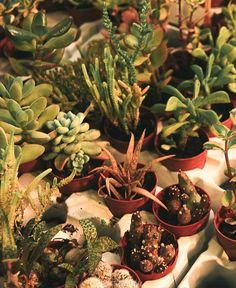Dónde hospedarse en Roma Succulents, Plants, Rome, Tourism, Viajes, Places, Succulent Plants, Plant, Planets