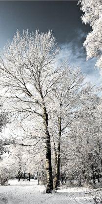 Winter White Tree