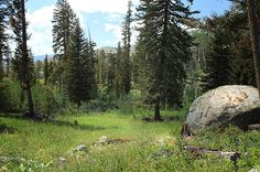"""""""Slough Creek Trail"""" in Yellowstone Park, Wyoming, 2012. We hiked here briefly. This area offers a much more secluded and primitive campsite which also means more run-ins with bears. Bear spray, check!"""