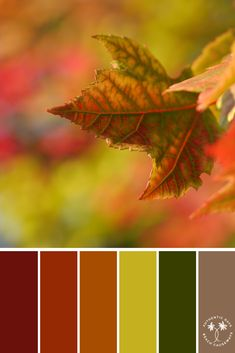 I am a full-time freelance color palette, surface pattern designer and artist for print on demand shops, such as RedBubble, and Art of Where. Soft Autumn Color Palette, Autumn Leaf Color, Colour Pallette, Colour Schemes, Color Combos, Color Balance, Polychromos, Design Seeds, Soft Summer