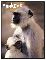 Free Monkey Lapbook from homeschool share