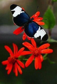 Adorno en la cabellera de la naturaleza #butterflies #mariposas