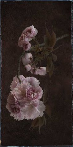 """Flowers In Neutral Moment-2 """"Cherry Blossoms"""" Archival pigment print Photo by Soichi Oshika"""