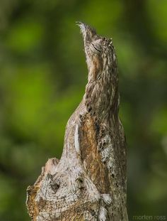 These Animals Are the Masters of Camouflage   Nature - BabaMail