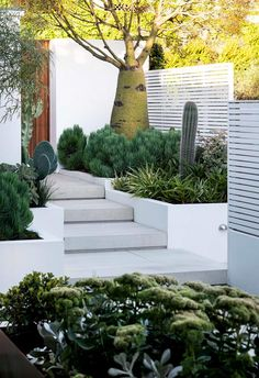 A refreshing approach brings a sculptural edge to this sustainable succulent garden in Sydney. Indoor Garden, Indoor Plants, Outdoor Gardens, Indoor Herbs, Indoor Outdoor, Outdoor Decor, Cactus, Coastal Gardens, Coastal Homes