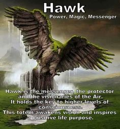 Hawk ~ Power, Magic, Messenger Hawk is the messenger, the protector and the visionaries of the Air. ~ It holds the key to higher levels of consciousness. ~ This totem awakens vision and inspires a creative life purpose. ~ from lindsdomain