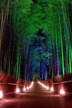 Bambus_bei_Nacht