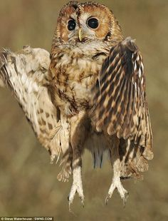 hey-y-owls | hoveranimals | Daily Mail article