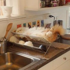 8 Ways Cats Help Us In The Kitchen