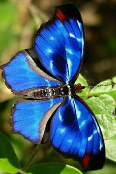 Different Types of Butterflies Butterfly Games, Butterfly Template, Blue Butterfly, Most Beautiful Butterfly, Beautiful Bugs, Amazing Nature, Types Of Butterflies, Flying Flowers, Butterfly Effect