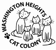 Rescuing cats in Washington Heights, NYC.