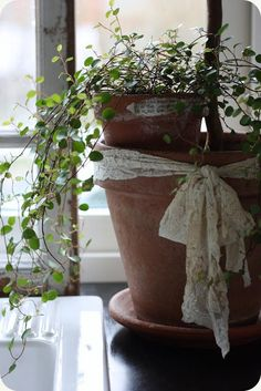 Lace ribbon around terra cotta pot.