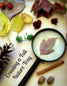 Create a Fall Nature Tray from Edventures with Kids
