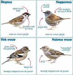 I Like Birds, Birds In The Sky, Kinds Of Birds, Little Birds, Happy Animals, Animals And Pets, Cute Animals, Nature Research, Bird Identification