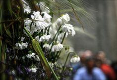 . Dandelion, Flowers, Plants, Flora, Royal Icing Flowers, Dandelions, Floral, Plant, Florals