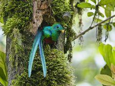 Quetzal | Wild Life World