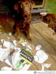 Dog training for dummies ??