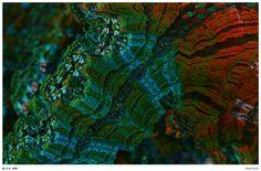 21 Best fractals images | Fractal Art, Fractals, Fractal design