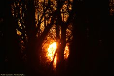 Sunset Through Trees at Sarobia