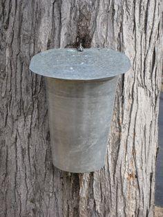 Maple maple nude sticky syrup sticky