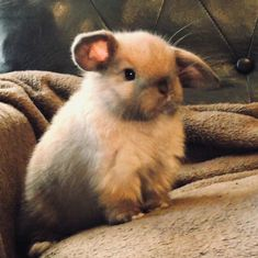 Bunny by sidd-says-gimme on DeviantArt Hamsters, Cute Baby Animals, Animals And Pets, Funny Animals, Baby Bunnies, Cute Bunny, Bunny Rabbits, Benny And Joon, Chinchilla