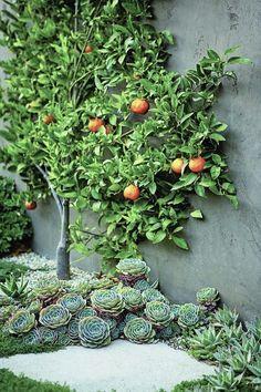 plant succulents under fruit trees