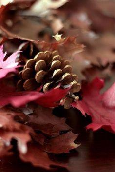 .~Pinecones and autumn Maple~.