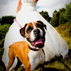 Our Boxer dog on a trash the dress shoot. She couldn't be at my wedding but I had to fit her in the pictures some how!
