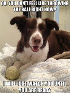 Funny Brown Dog #Ball, #Fell