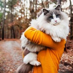 What a big fluffy pretty cat--with big paws too