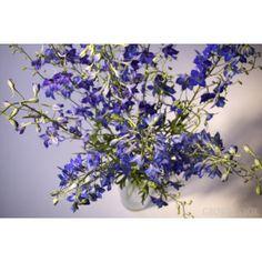 GrowersBox.com: Flowers: Delphinium Blue 100 Stems: Wholesale Flowers