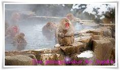 Um pouquinho do Japão.:   JigokudaniÉ uma atração turísticalocalizada em ...