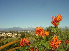 #Bellville #Weingebiet #Durbanville #Kapstadt #Südafrika #Wein
