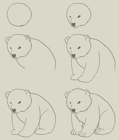 Google Image Result for http://idrawgirls.com/tutorials/wp-content/uploads/2012/06/how-to-draw-polar-bear-cub.jpg