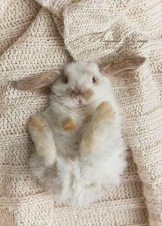 ❄KNIT ONE PURL ONE❄ *Cute fuzzy wuzzy bunny*