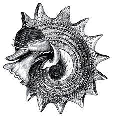 shell2.jpg (813×820)