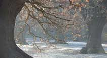 A snow-speckled Barn Hoppitt viewed through ancient oaks.