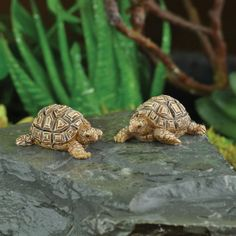http://www.efairies.com/store/pc/Miniature-Tortoise-Set-of-2-Assortment-254p9496.htm  Price $5.99