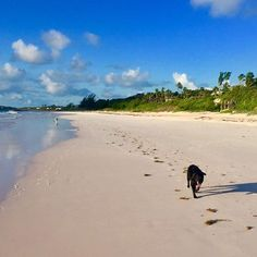 88 best pink sands beach images pink sand beach pink sands resort