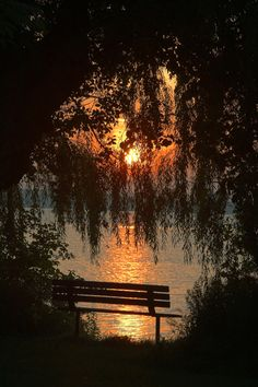 Shadows at Sunset. Willow Tree. Nature Photography.