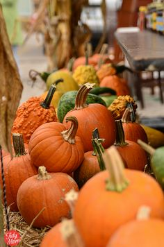 FALL: pumpkins
