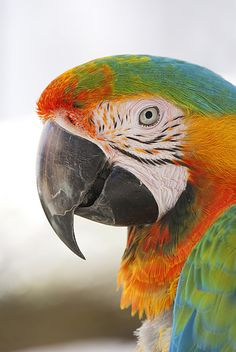 Parrot | Flickr - Photo Sharing!
