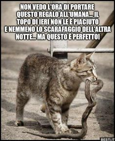 Cute Cats And Dogs, Animals And Pets, Funny Animals, Cute Animals, Italian Humor, Funny Times, Love Pet, Funny Animal Pictures, Crazy Cats