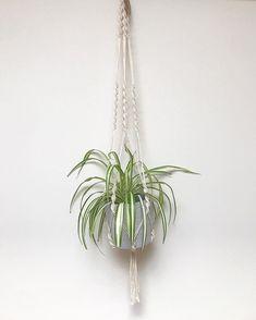 """hangs. on Instagram: """"S u s a n - 🌱: Spider . . . . . . . #macrame #plants #plantsofinstagram #halifax #novascotia #eastcoast #maritimemakers #hangingplants…"""" Hanging Plants, Nova Scotia, East Coast, Plant Hanger, Spider, Macrame, Instagram, Spiders"""