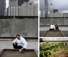 rooftop garden at ABC with jean-georges and paulette cole