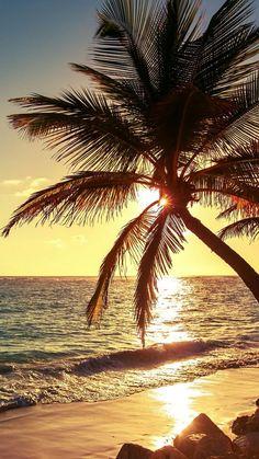 New Landscape Sunset Beach Palm Trees Ideas Tree Wallpaper Iphone, Summer Wallpaper, Beach Wallpaper, Nature Wallpaper, Wallpaper Backgrounds, Trendy Wallpaper, Iphone Backgrounds, Iphone Wallpapers, Beach Pictures